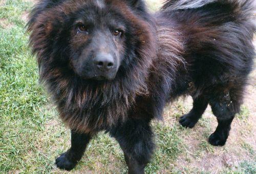 Kofi aka Gate Dog