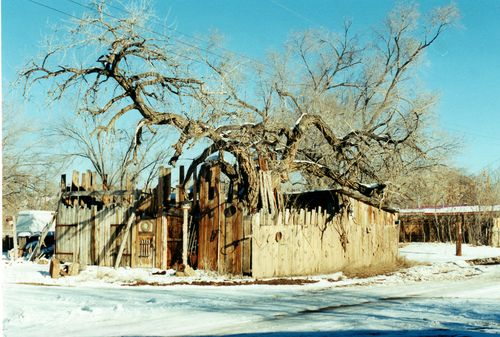Tree&house