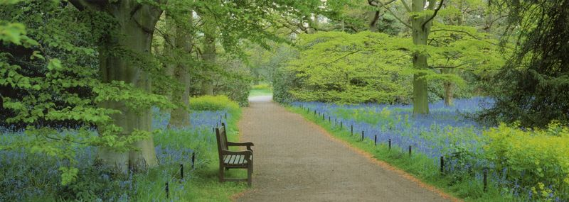 Bluebell Time at Kew