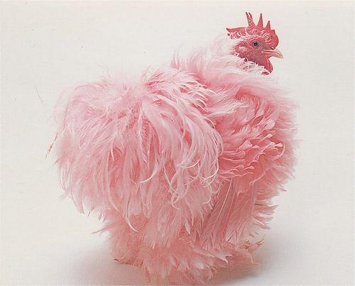 Pinkchicken